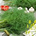 Organic Dill Seed - Durkat Variety Non GMO