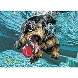 WILLOW CREEK PRESS Underwater Dogs: Rhoda