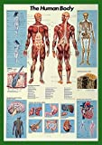 Posters du Monde Pósteres, 96.5 x 66 cm