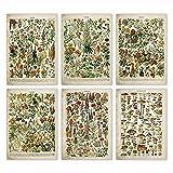 DFRES Cartel de Flores Vintage Arte con Estampado Floral Antiguo Cartel Educativo botánico Arte de la Pared de Setas Decoración para el hogar Papel Kraft Sala de Estar 30x40cmx6 Sin Marco