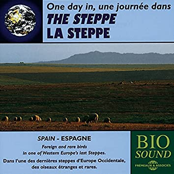 The Steppe in Spain / Western Europe (Europe occidentale, oiseaux étranges et rares)