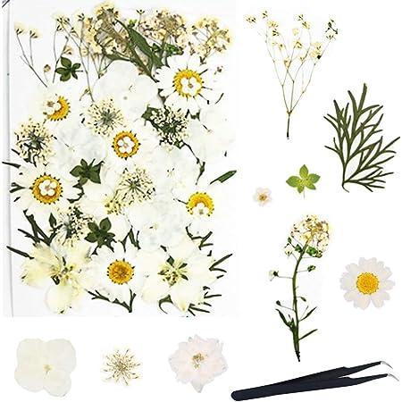 HEALLILY 16 St/ück Gepresste Getrocknete Blumen Nat/ürliche Gepresste Blumen f/ür Scrapbooking DIY Craft Kerze Harz Schmuck Anh/änger