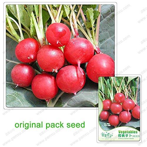 60 graines/Pack, graines de radis cerise, jardin en pot pour cultiver des graines de légumes verts biologiques, graines de radis