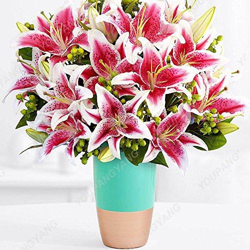 Promotion! 200pcs parfum Lily Graines de fleurs Germination 95% Creepers Bonsai Bricolage Fournitures Jardin Pots Planters Livraison gratuite Violet