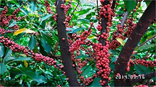 Effacer: 30pcs fruits Graines du Brésil Grape Tree Jabuticaba Fruits Pousse sur son tronc Jardin Décoration Plante