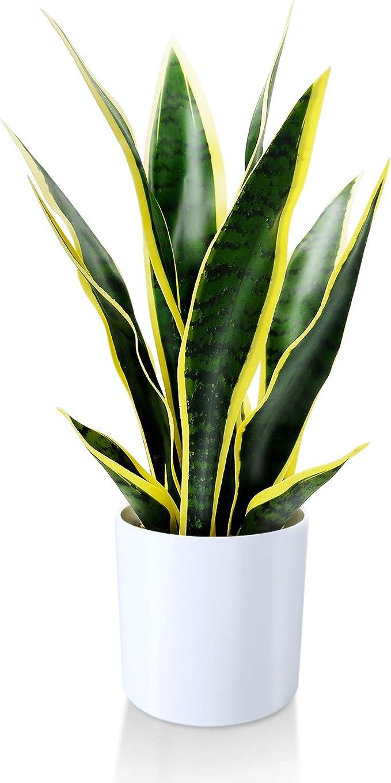 758 opinioni per Kazeila Mini Piante finte in Vaso, pianta di Serpente Artificiale da 40 cm per