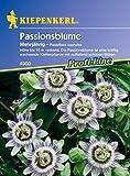 Kiepenkerl Passiflora caerulea (Passionsblume) 0-0cm / 1 Packung (Blumenzwiebeln, Sommerblüher (Aussaat im Frühjahr))