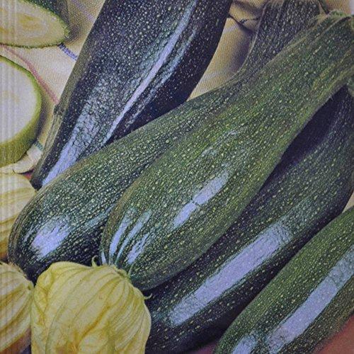 Courgette Black Beauty - 4 sacs de graines