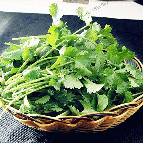 30pcs/sac graines de coriandre, les graines de persil saisons organique plante des graines de légumes pour jardin de la maison
