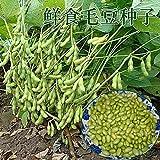 Semi di soia verde, semi di soia verde giapponese, a maturazione precoce, ad alto rendimento, fagioli freschi, semi di fattoria, semi di ortaggi 300g-semi di Edamame 300g