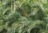 Telón de Fondo de follaje de Hierba Palmeras Tropicales Hojas de árbol Fiesta de cumpleaños Foto Estudio fotografía Accesorios de Fondo A9 10x10ft / 3x3m