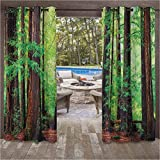 ScottDecor Tree Woodland Modern Window Curtains for Garden Drapes Porch Gazebo Curtains Redwood Trees Northwest Rain Forest Tropical Scenic Wild Nature Lush Branch Image 108W x 108L Inch