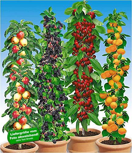 BALDUR-Garten Säulen-Obst-Raritäten-Kollektion Apfel, Brombeere, Kirsche + Aprikose, 4 Pflanzen Obstbäume