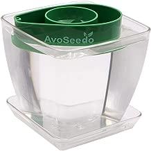 AvoSeedo Bowl Set Grow Your Own Avocado Tree, Evergreen, Perfect Avocado Tree Growing Kit for Every Avocado Lover with Plan Pot (Kit-Green/Transparent)