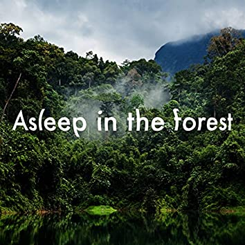 Asleep in the Forest