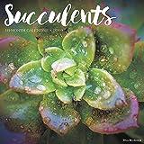 Succulents 2019 Wall Calendar - Willow Creek Press