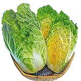 【メール便配送】国華園 種 野菜たね ハクサイ F1オレンジミニ白菜 1袋(3ml)【※発送が株式会社 国華園からの場合のみ正規品です】