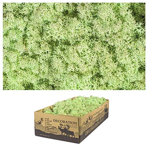 1 caja de musgo real – Musgo decorativo natural para manualidades en...