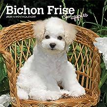 Bichon Frise Puppies 2020 7 x 7 Inch Monthly Mini Wall Calendar, Animals Dog Breeds Puppies