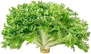 Lettuce Frisse Green Holland | Healthy & Nutritious | Crisp & Tender | Mild & Peppery | Premium Quality | Cleaned & Saniti...