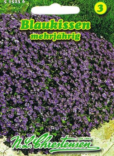 Blaukissen 'Aubrieta cultorum'...