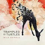 Songtexte von Trampled by Turtles - Wild Animals