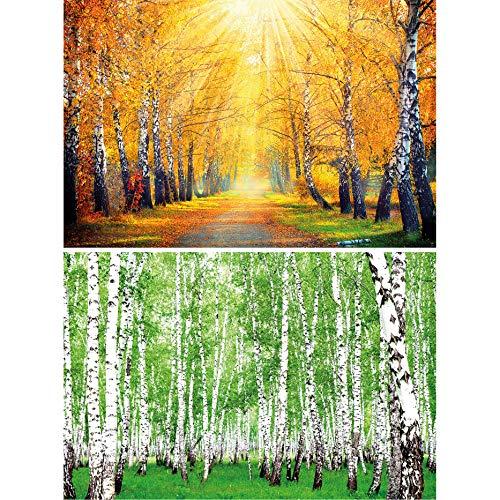 GREAT ART 2er Set XXL Poster – Birken – Goldener Herbst & Grüner Sommerwald Wald Landschaft Natur Bäume Waldweg Allee Wand-Bild Dekoration Fotoposter Wanddeko (140 x 100cm)