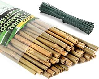 Pllieay 32 Pieces Natural Bamboo Stakes with 150 Pieces 15 cm Long Green Metallic Twist Ties, 2 Feet