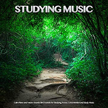 Studying Music: Calm Piano and Nature Sounds Bird Sounds For Studying, Focus, Concentration and Study Music
