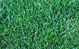 1kg Drought Resistant Lawn Seed with Kentucky Bluegrass (SSMG) Grass for Dry Soil