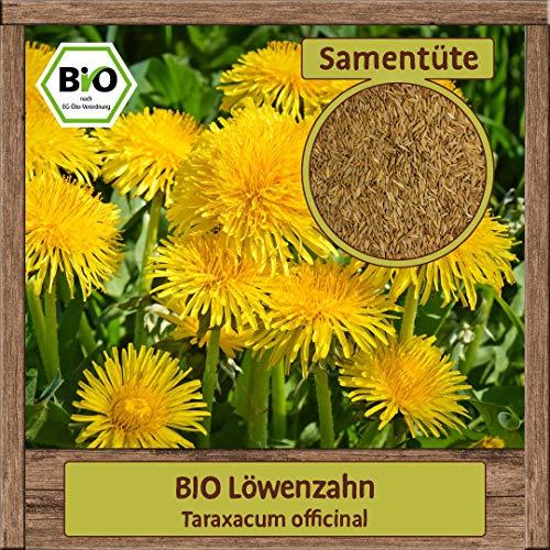 BIO Löwenzahn Samen Kräutersamen (Taraxacum officinal) Wildblume mit essbare Blüten mehrjährig & winterhart