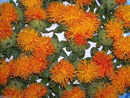 100 semillas de cártamo, Carthamus tinctorius, de Dyer Azafrán (Hong-Hua) Orgánico!