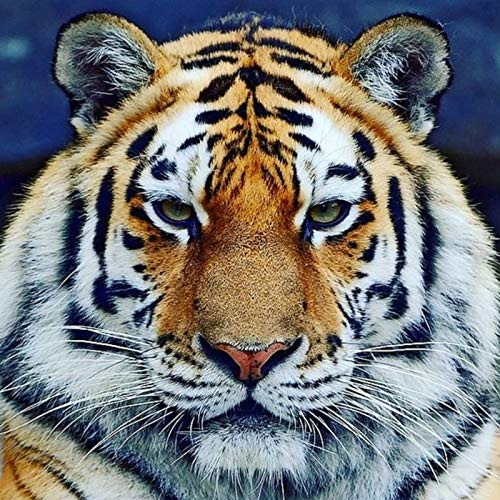 DIY Diamond Painting,by Number Kits Crafts & Sewing Cross Stitch,Wall Stickers for Living Room Decoration Tiger 11.8x11.8 in by Megei