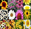 DAISY Crazy Mixed Daisies Flower Seeds - By MySeeds.Co