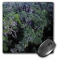 3drose LLC 8x 8x 0.25インチマウスパッド、濡れトロピカルオーストラリアRainforest ( MP _ 37788_ 1)