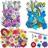Frasheng Flores Prensadas Secas,120 piezas de bricolaje conjunto de flores...