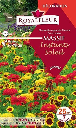Royalfleur PFRF08686 Graines de des Mélange de Fleurs mon Massif Soleil 25 m²
