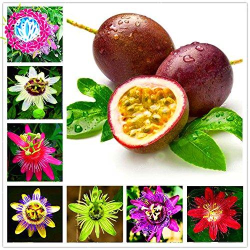50 Pcs Passiflora Graines Fruits Graines Arbre Bonsai Tropical Passion Graines de fleurs pour jardin plante Sementes De Frutas Raras