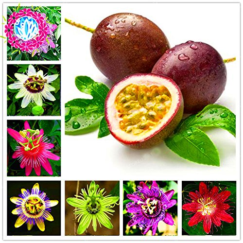 50 Pcs Passiflora Graines Fruits Graines Arbre Bonsai Tropical Passion Graines de fleurs pour jardin plante Sementes De Frutas Raras