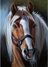 5D DIY Diamond Painting Full Drill Cross Stitch Kit Diamond Painting Number Kits Embroidery Art for Adults Horse Head 11.8x15.7in