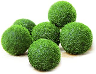 6 Nano Luffy Marimo Moss Balls - Unique Green Spherical Plants - Create Legendary Lush Landscape in Your Aquarium - Natural Habitat for Triops/Sea Monkeys - Perfect Décor - Thrive with Minimal Care
