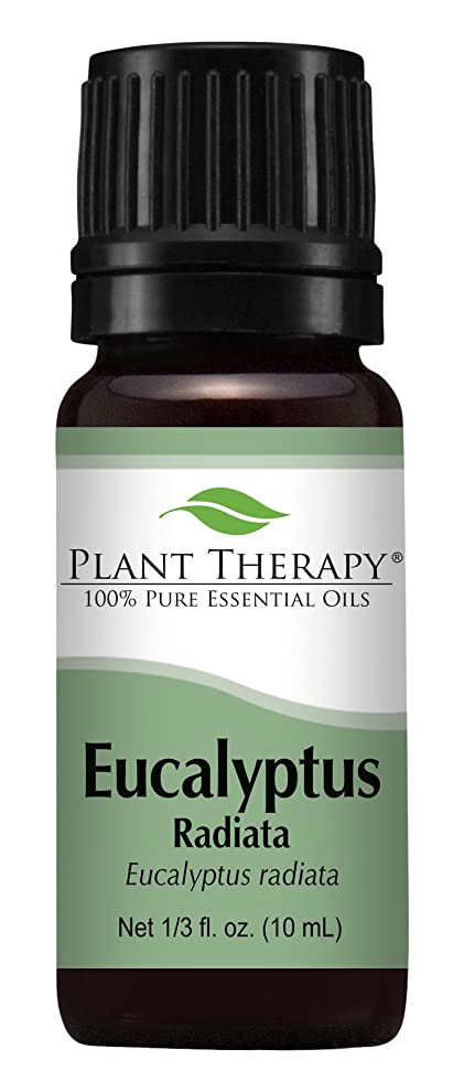 フラスコ掃く歪めるEucalyptus Radiata Essential Oil. 10 ml (1/3 oz) 100% Pure, Undiluted, Therapeutic Grade by Plant Therapy Essential Oils
