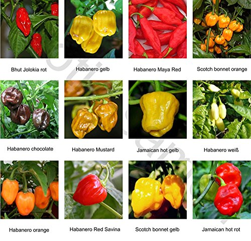 Samen - Saatgutsortiment - Set - Mix - Mischung - scharfe Chilis - Peperoni - 12 Sorten á 10 Samen