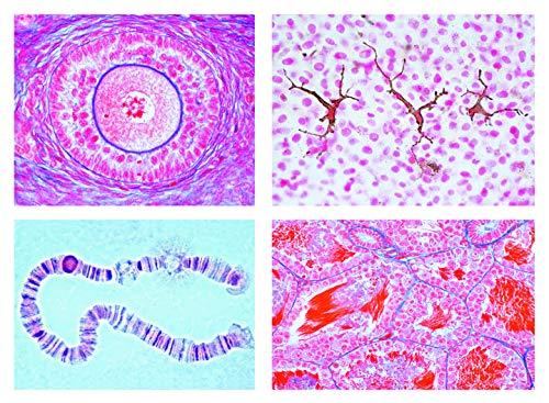 Mikropräparat Serie - Die Tierzelle