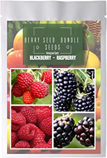 Homegrown BlackBerry Raspberry Seeds, 480 Seeds, Bundle 4 Packets