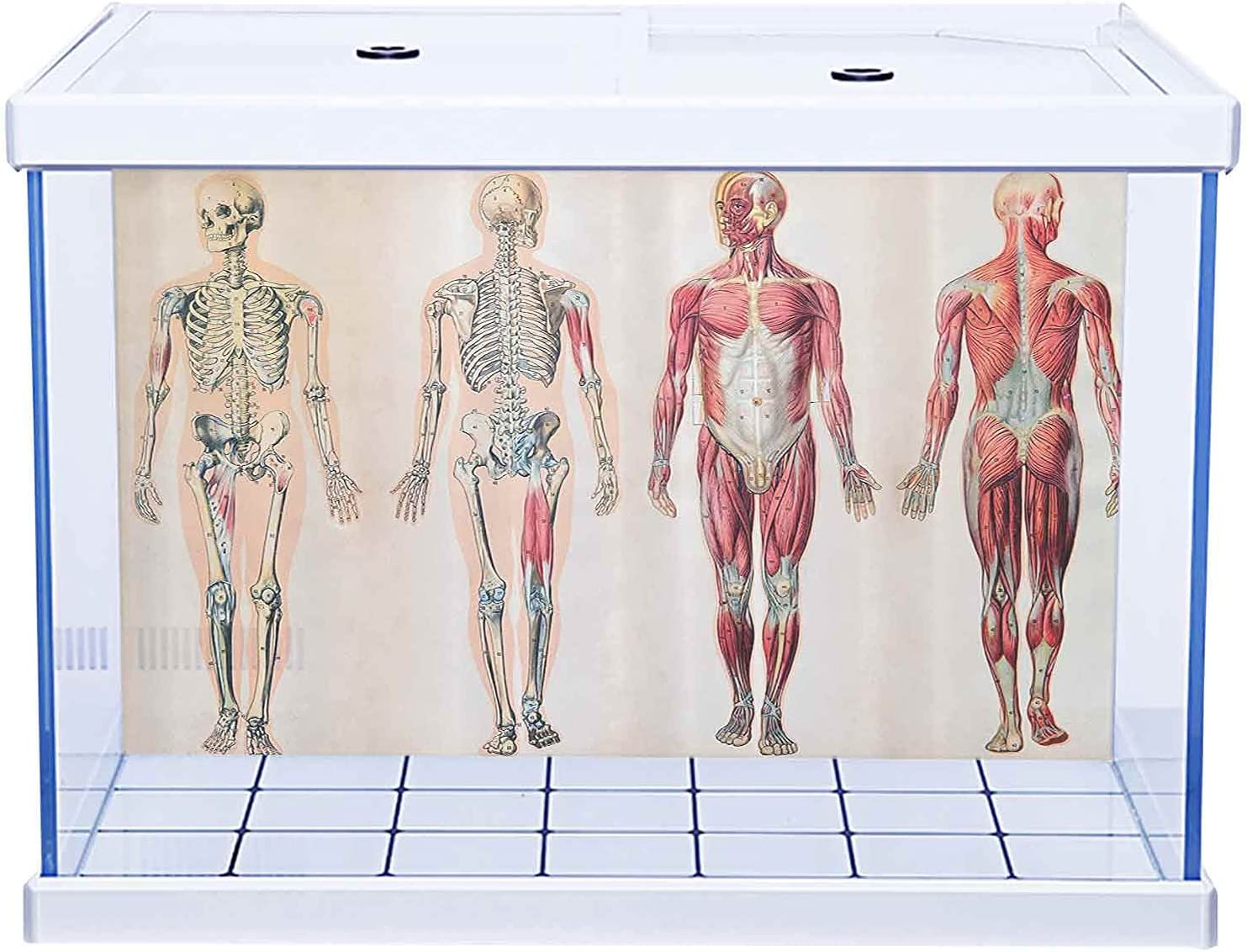 HD Aquarium Background Ranking TOP20 Human sold out Anatomy Front of Chart Body Vintage