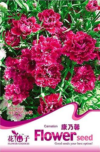Vente chaude 30pcs Carnation, graines de fleurs, Bonsai Graines Plante en pot jardin Livraison gratuite