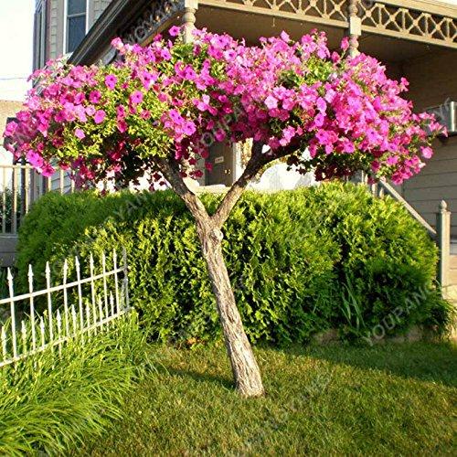 200PCS couleurs mélangées Petunia Graines de fleurs Graines Fleurs vivaces pour jardin Bonsai Pot Plantation Belle décoration de la maison rose