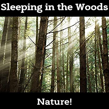 Sleeping in the Woods - 30 Nature's Lullabies for Newborn