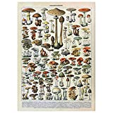 Imágenes Lienzo Cartel de Setas de Insectos de Plantas 50x75cm Frameless,Pintura al óleo Impresa en Lienzo Carteles Arte de Pared para Sala de Estar Decoración